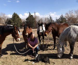 EEA presents new series on Equine Welfare