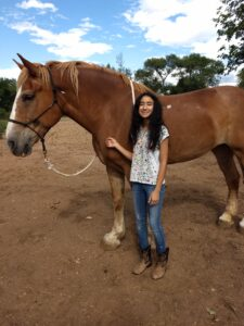 Ever been curious about horses? Want to learn more about them?
